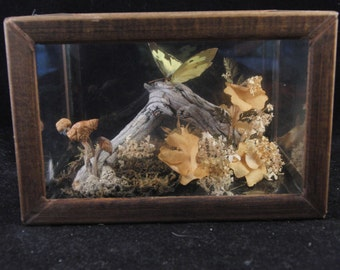 Vintage decorating butterflies taxidermy by Flowers of the Rockies