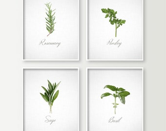 Kitchen Wall Decor - Cooking Herbs Art Prints Set of 4 - Basil Parsley Rosemary & Sage - Kitchen Wall Art - Unique Kitchen Prints Food Decor