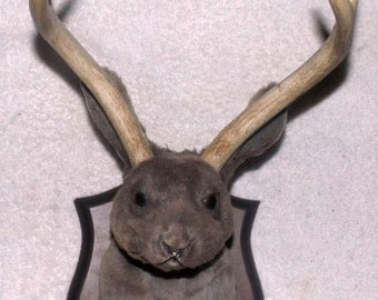Taxidermy Jackalope Wall Trophy