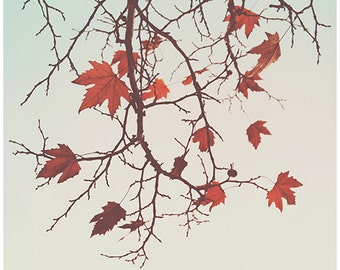 Autumn Nature Fine art photography Fall Rusty Leaves Tree Branches Mint Neutral color print Abtract artwork Minimalist fine print Home decor