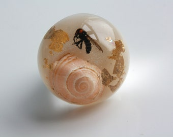 English snail shell, gold leaf and fly ring