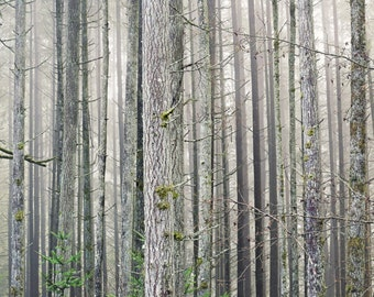 Whispering Pine -  Fine Art Photography - Tree, Forest, Nature, Dreamy Wall Decor