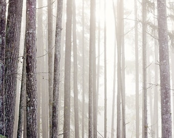 Angelic Woodlands -  Fine Art Photography - Tree, Forest, Nature, Dreamy Wall Decor
