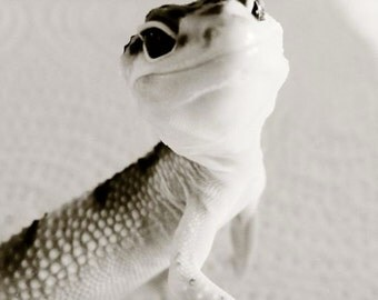 Smile Happy Gecko - Snow Leopard Gecko - Reptile Pet - Lizard - Reptile - Wall Decor - Gecko Photograph - Leopard Gecko - Animal Photography