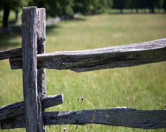 Photograph, Rustic Photography, Old Fence and Thistle, Old Wooden Fence, Split Rail Fence, Farm Fence Photography