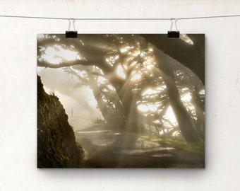 California Coast Fog Photo, Sunshine, Tree Photography, Landscape Photo