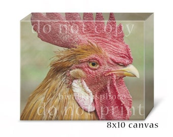 Rooster kitchen decor, 8x10 canvas, fine art photography, nature photography, animal decor, country chic, cottage chic, farm wall art