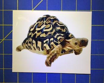 Leopard Tortoise Decal/Sticker 3.5X5