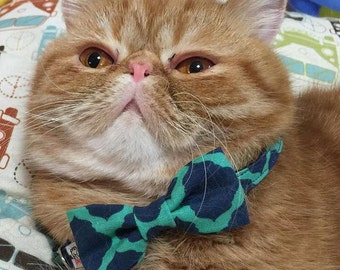 Green and Blue Bow Tie Collar