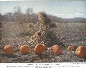 1923 Colorado Pumpkin Patch Cornstalks Vintage Photo Illustration - Halloween Autumn Fall Seasonal Antique Americana Print Art Wall Decor