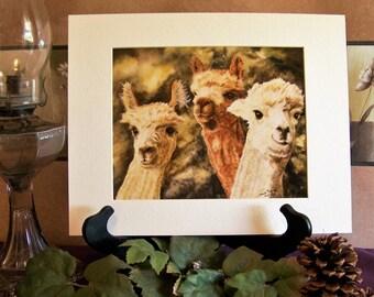 Alpacas, Art print 8in x 10in