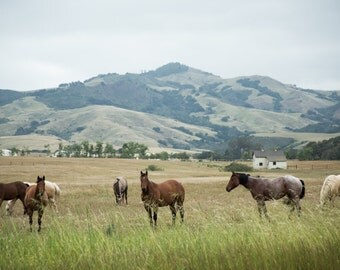 Pacific Coast Horses Photographic Print or Canvas