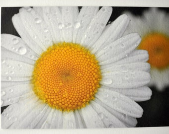 Daisy Photo Hemp Card