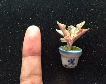 Mini Aglaonema, Miniature Polymer Clay Flowers, Handcarft