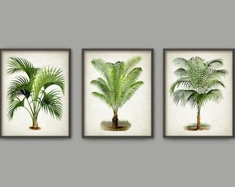 Palm Tree Botanical Wall Art Print Set Of 3 Modern Home Decor Palm Tree