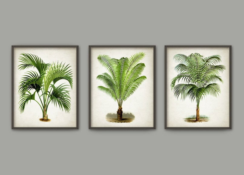 palm tree botanical wall art print set of 3 modern home. Black Bedroom Furniture Sets. Home Design Ideas