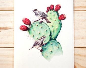 Cactus Wrens CARD