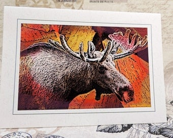 Moose Greeting Card, Moose Art Card, Moose Photo Art