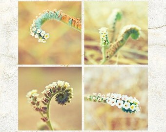 Digital Download Photo set of 4 AUTUMN Season Flowers Wall Art Macro 'Cats Curls' SET-03 Photography scenic orange green hues house deco
