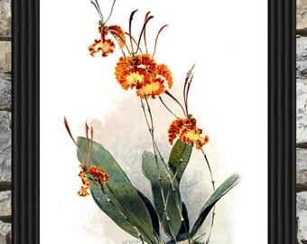 Vintage Flower 2 - Printable Instant Download