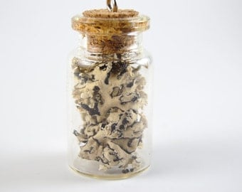 Hand-made lichen-in-a-bottle necklace
