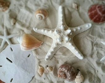 Knobby Starfish, Natural knobby starfish 4-5""