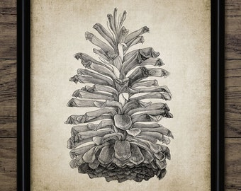 Pine Cone Print - Vintage Pine Cone Illustration - Pine Tree - Forest - Digital Art - Printable Art - Single Print #305 - INSTANT DOWNLOAD
