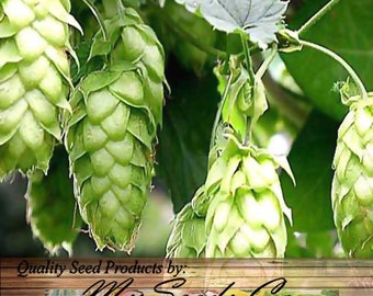 Beer HOPS Seeds with Cascade & Centennial Rhizomes - Humulus lupulus Bundle - Brew Your OWN BEER - Zones 3-8