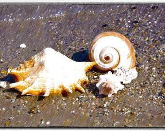 shells on the sand,Fine Art Photo,home decor, Romantic Gift,nature