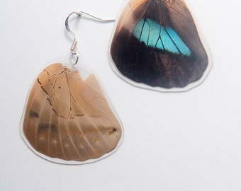 Demophan Real Butterfly Earrings