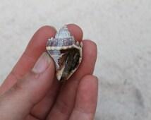 Mini orgonite conch sea shell, EMF protection