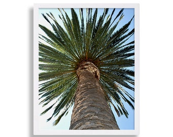 Palm Tree Photo California Photography San Diego Art Print Beach Decor Beachy Prints Modern Decor House Staging Palm Trees Beach Photography
