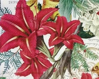 Amaryllis flowers etsy fr for Amaryllis rouge signification