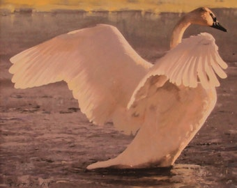 Trumpeter Swan Original 20 x 24 Oil Painting