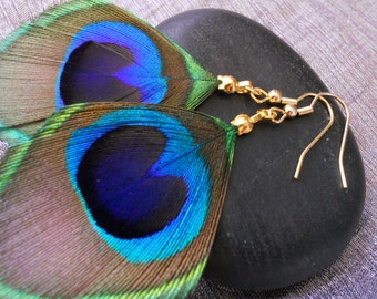 Natural, gold plated Peacock feather earrings.