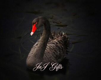Black Swan Digital Downloadable V1