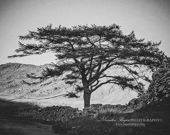Black and White Photography, Tree Photo, Natur Photography, Fine Art Photography, Home Decor, 5x7 photo