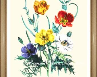 "Botanical Print. Poppy #6. Flower Prints.  Floral Wall Art.  Poppies Print. 5x7"", 8x10"""