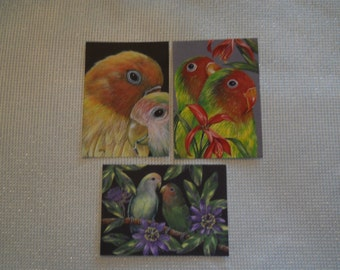 ACEO Trio Lovebirds Exotic African Parrot bird prints