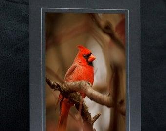 Male Northern cardinal, Cardinal greeting card, wildlife photography, Nature, Cardinal bird, Cardinal Note Card, Cardinal prints,