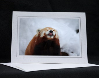 Red Panda sticking out tongue, photo greeting card, wildlife photography, Nature, upstate NY, any occasion,