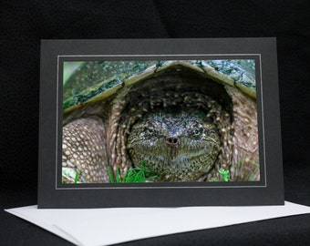 Female Snapping Turtle Closeup, photo greeting card, wildlife photography, Nature, upstate NY, any occasion,