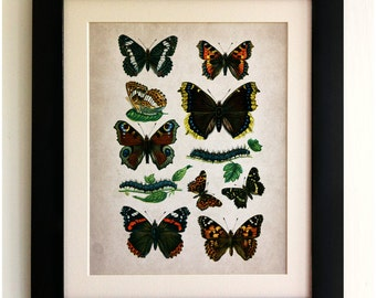FRAMED Butterfly Print - Beautiful Butterflies/Caterpillars, Vintage Style, Shabby Chic, Wall Art Print, Handmade, Fab Picture Gift!!