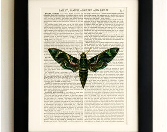 FRAMED ART PRINT on old antique book page - Big Butterfly / Moth, Insects, Vintage Upcycled Wall Art Print Encyclopaedia Dictionary Page