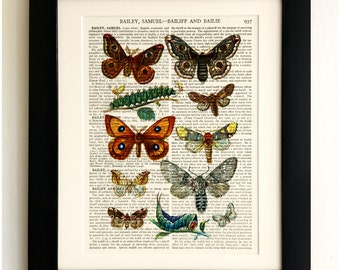 FRAMED ART PRINT on old antique book page - Butterflies, Caterpillars, Insects, Vintage Upcycled Wall Art Print Encyclopaedia Dictionary