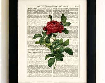 FRAMED ART PRINT on old antique book page - Red Rose, Botanical, Flower, Vintage Upcycled Wall Art Print Encyclopaedia Dictionary