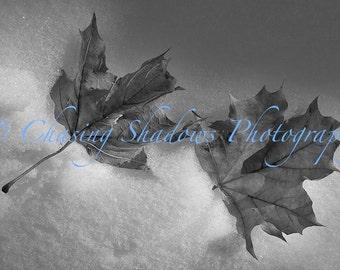 Winter Leaves 3