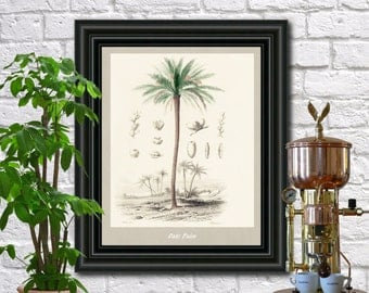 Date Palm Botanical Print Vintage Date Palm Illustration Kitchen Wall Art Fruit Poster  0441