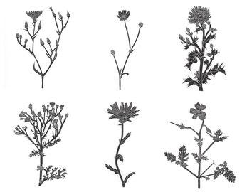 A4 Amsterdam Wild Flower Linocut Print Set