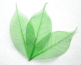 Spring Green Skeleton Leaves